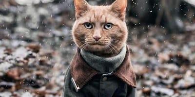 cat wearing coat