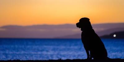 permiso trabajo muerte perro espana