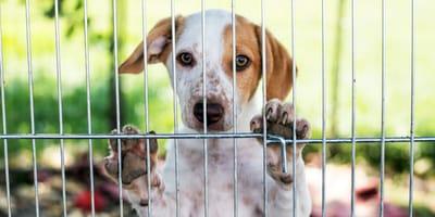 8 buoni motivi per adottare un cane al canile (e falsi miti da sfatare!)