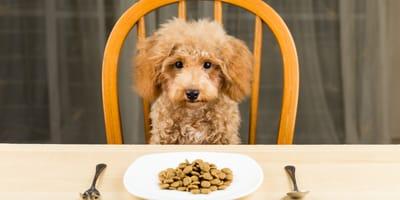 Comida casera para perros: ¿Cuáles son las cantidades que hay que darle?