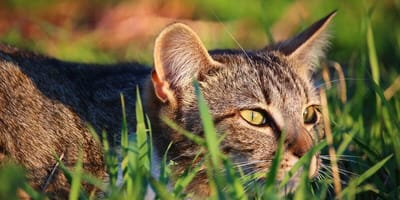 A cosa serve l'erba gatta?