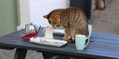 gatto-sul-tavolo-e-stoviglie