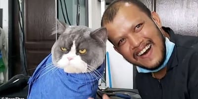 Kot_z_groomerem
