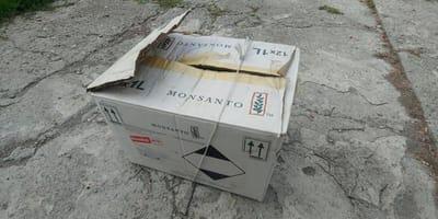 Kätzchen in Kiste