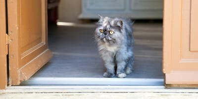 Katze besucht Familien