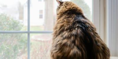 gatto-di-spalle-davanti-finestra