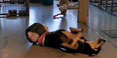 perro minusvalido felicidad
