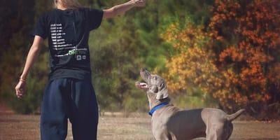 Perché il cane salta addosso? Risolvi il problema così