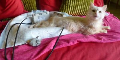 niepelnosprawny kot
