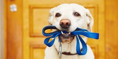 Habituación o sensibilización: cómo educar a mi perro