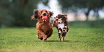 Małe psy - poznaj najpopularniejsze rasy
