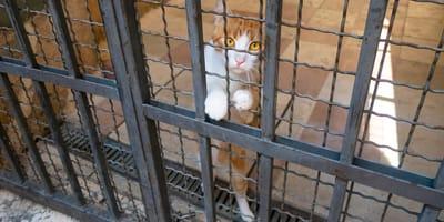 gato encarcelado