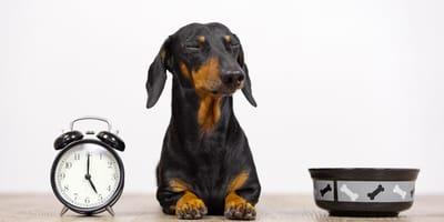 Cambio de hora: cómo afecta a mi perro