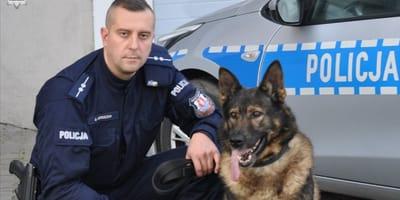Owczarek_niemiecki_pies_policyjny_z_opiekunem