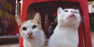 Cats rescue owners from landslide