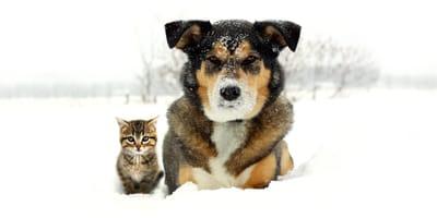 Kätzchen und Schäferhund im Schnee