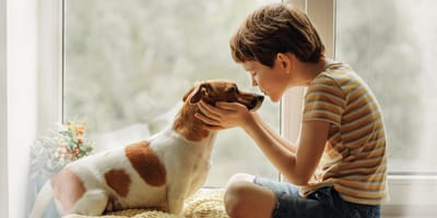 Kid kissing his jack Russell dog