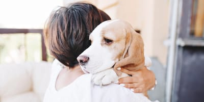 Así suena el pasodoble gaditano dedicado a un perro que ha conquistado a España