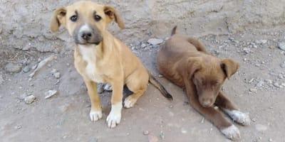perros buscan hogar