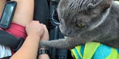Kotek trzymający opiekuna za rękę.
