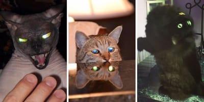 25 fotos que demuestran que estos gatos son... ¡DEMONIOS!