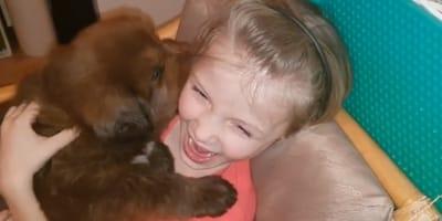 cachorro mastin tibetano muerde a niña
