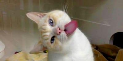 kot całuje szybę