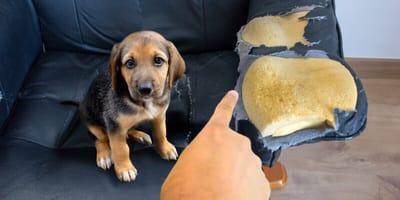Kissen, Sofa, Spielzeug: Wenn der Hund alles zerstört