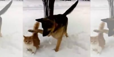 pastor aleman y gato jugando en la nieve