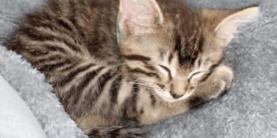 gato perdido viajo coche estados unidos