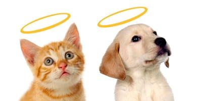 perro y gato angelitos