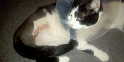 Poorly kitten