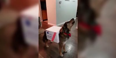 cane travestito da ambulanza per halloween