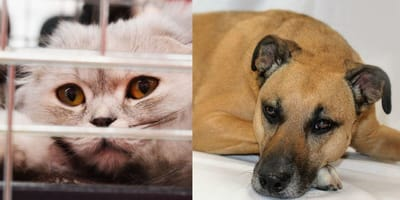 Donate unwanted items to pet rescue centres