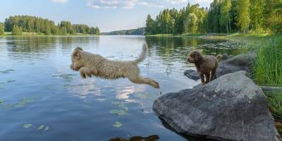 Die 7 Wasserhund-Rassen im Überblick