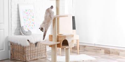 Come scegliere il miglior tiragraffi per gatti?