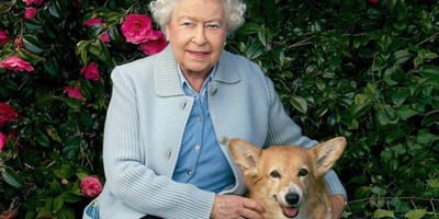 The Queen devastated after the death of a beloved Corgi