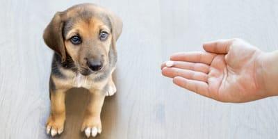 Schmerzmittel für Hunde: Dem Hund niemals Aspirin geben!