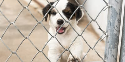 Puppy dog in a shelter
