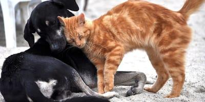 Cane-nero-gatto-rosso-si-coccolano