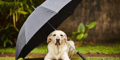 Pogoda pod psem – skąd wzięło się to wyrażenie?