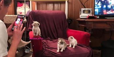 Drei Kätzchen auf Sessel