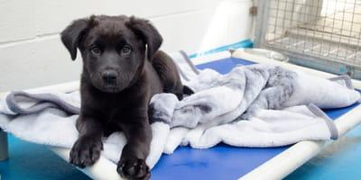 Der Winter kommt: Hamburger Tierschutzverein berührt mit Aktion für obdachlose Hunde