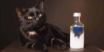 Kätzchen Tipsy und eine Flasche Wodka