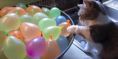 Kätzchen sieht Wasserbomben, fährt die Krallen aus und... (Video)