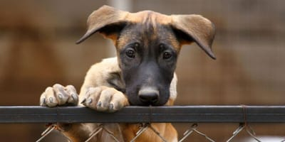 Learn why giving a dog away on eBay could seriously damage its health