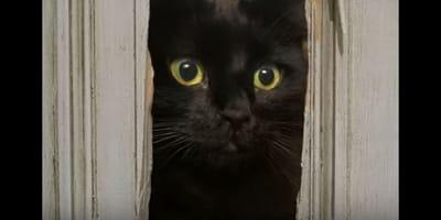 Una gatta è la protagonista di parodie dei classici del cinema (Video)