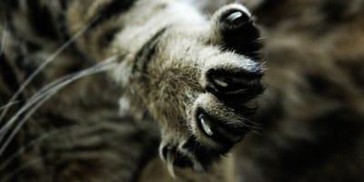 kocie pazury