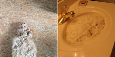 gatos camuflados casa