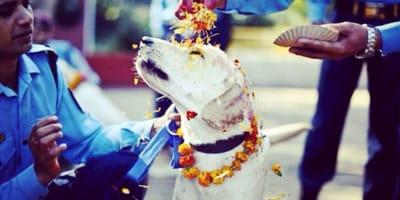 Il festival del Kukur Tihar in Nepal e la celebrazione dei cani